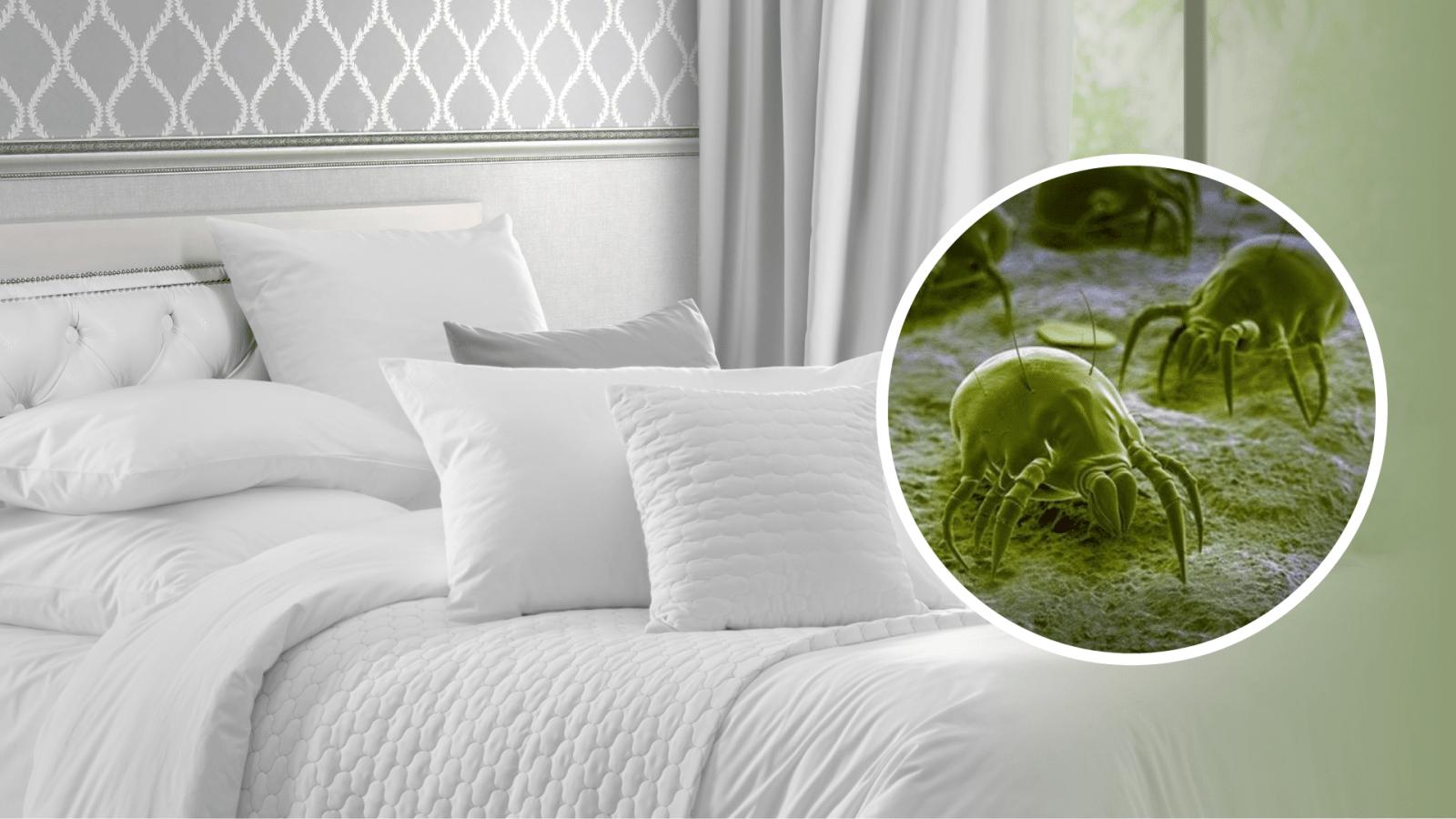 Saiba como lavar sua roupa de cama e se proteger dos ácaros
